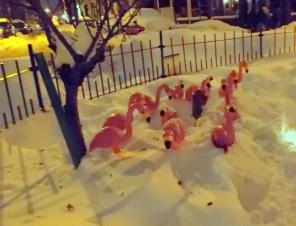 FlamingoFinale2014