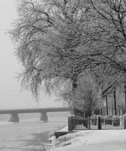 ice storm (Dec. 12, 2008)