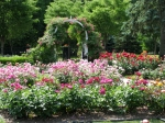 rose beds in the Schenectady NY Central Park Rose Garden –20June2011