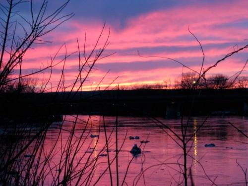 backyard sunset March 12, 2009