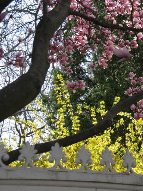 magnolias09-26frontDetail
