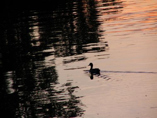 - Riverside Park, Memorial Day 2008 -
