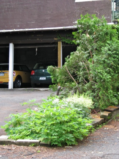 Cherry Tree Gone - garage view - 21June2009