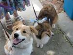 Stockade Sidewalk Sale -Doggies & Piggies06June09