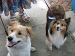Stockade Sidewalk Sale – Canine Cuties on Front St.06June09