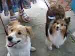 Stockade Sidewalk Sale – Canine Cuties Casey & Lollipop –06June09