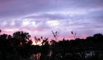 daylily sunset panoramacameo