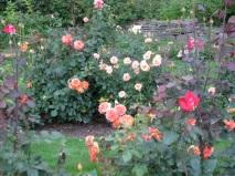 Rose Garden miscellanea - 03Aug09 - Schenectady, NY