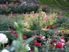 Rose Garden terrace - Schenectady Central park 03Aug09
