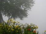 Mohawk fog and Riverside Park flowers near Washington Ave. –21Sep09