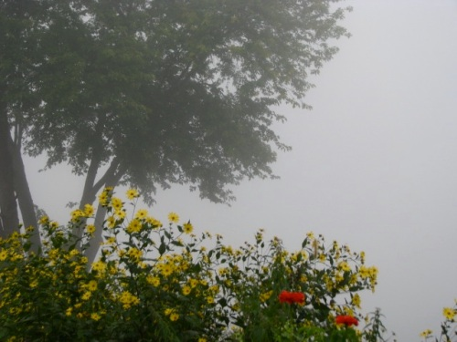 Mohawk fog and Riverside Park flowers near Washington Ave. - 21Sep09