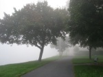 Mohawk Fog along the pathway at the western end of Riverside Park –21Sep09