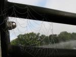 dewy spider web with fog lifted – Riverside Park esplanade railing – 8:30 AM21Sep09