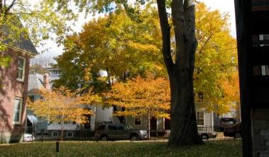 cherry trees along street between 10 & 16 Washington Ave. - 25Oct09