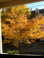 cherry tree seen through the front door window at 16 Washington Ave. Schenectady Stockade - 26Oct09