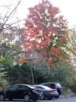 mottled tree behind the Historical Society and 26 Washington Ave. –20Oct09