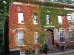 27 Washington Ave., Schenectady Stockade – autumn vines Oct. 20,2009