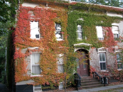 27 Washington Ave., Schenectady Stockade - autumn vines Oct. 20, 2009