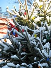 detail of Stockade Christmas Tree on the morning of the tree lighting -6Dec09
