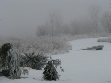 foggy scene from rear of the home of Bill & Cyndi Miner in Duanesburg NY- 25Dec09