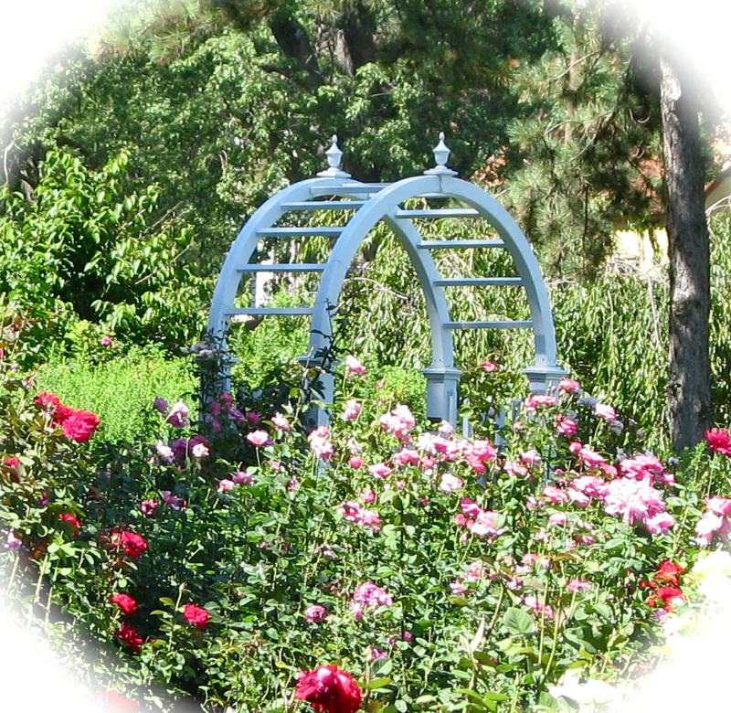 July Ends Gracefully At The Rose Garden Suns Along The