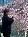 Prof. Yu Chang prepares to photograph a blooming cherry blossom tree on the grounds of Congregation Gates of Heaven - Schenectady NY - 30Apr2011