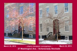 comparison of cherry blossoms in front of 27 Washington Ave. in the Schenectady NY Stockade on March 22 of 2012 and 2013