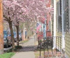 a view of cherry blossoms on Front St. looking east from the Lawrence Circle - Schenectady NY Stockade -- 28Apr2013