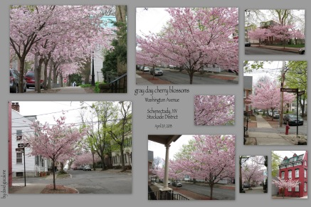collage og photos of Washington Avenue cherry blossoms on a gray day - Schenectady NY Stockade - 29Apr2013