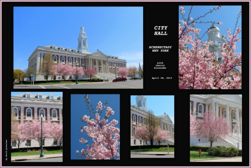 Schenectady's City Hall with cherry blossoms at full bloom - 28Apr2013