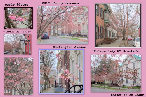 a collage of photos taken by Yu Change of the earliest cherry blossoms along Washington Avenue in the Schenectady NY Stockade - 23Apr2013