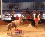 Cavallino (Little Horse)