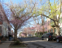 view south on Washington Ave. from the corner of Front Street in the Schenectady NY Stockade - 28Apr2014
