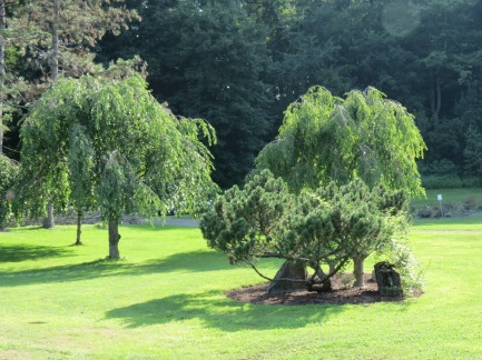 trees near the Rose Garden in Schenectady's Central Park  01Aug2014