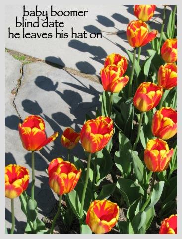1stRef-tulipshadow2012