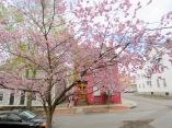 tree at 16 Washington Ave.