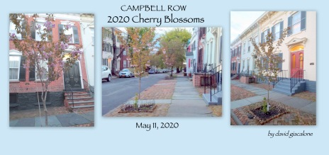 cb2020CampbellRow-001